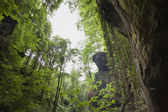 Cliffs in a jungle with hanging vegetation — Stock Photo