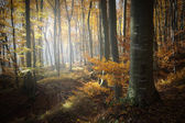 Autumn in a colorful forest — Stock Photo