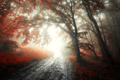 Red leafs on tree in a forest with fog — Stock Photo