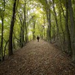 Man on a path in a forest - Stock Photo