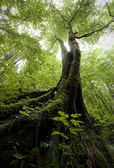 Tree with moss in a green forest — Foto de Stock