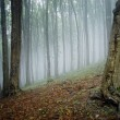 Fog appearing in the forest - Stock Photo