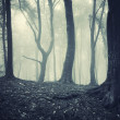 Eerie forest - Stock Photo