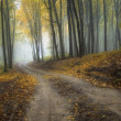 Road trough a forest in autumn - Stock Photo