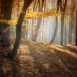 Autumn in a forest — Stock Photo