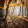 Autumn in a forest - Stock Photo
