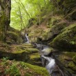 Green moss near a mountain river - Stock Photo