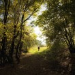 Man walking out of a forest in summer — Stock Photo
