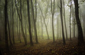Haze in a forest — Stock Photo