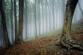 Fog appearing in the forest — Stock Photo