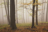 Autumn in a beautiful forest — Stock Photo