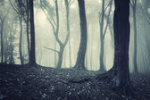 Eerie forest — Stock Photo