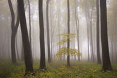 Tree in a forest with fog in autumn — 图库照片