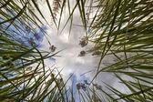 Groen gras en witte wolken op blauwe hemel — Stockfoto