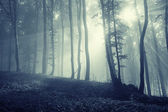 Sunshine in a eerie forest with fog — Stock Photo