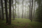 Gröna skogen med dimma på sommaren efter regn — Stockfoto