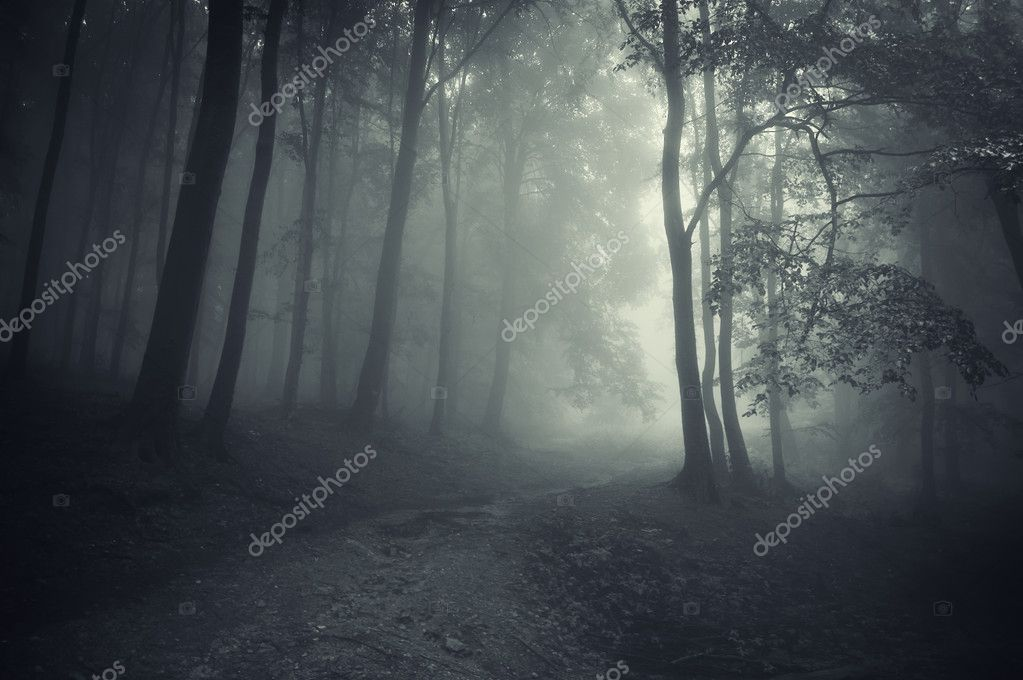 Фотообои Темный лес с дороги