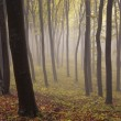 Fog moving trough trees in a colorful forest in autumn — Stock Photo
