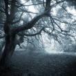 Dark creepy scene in a forest with fog and scary tree on halloween — Stock Photo #41051175