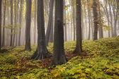 Yellow and green plants near tree trunks in a forest with fog in autumn — Stock Photo