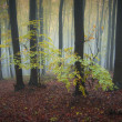 Yellow trees in a forest with fog in autumn — Stock Photo