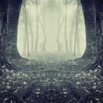 forêt sombre symétrique avec brouillard et arbres — Photo #43939673