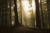 Sun shining in a dark forest with fog — Stock Photo