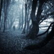 Man in dark forest with fog on halloween — Stock Photo #45317691