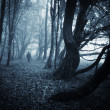 Man in dark forest with fog on halloween — Stock Photo