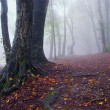 MYsterious creepy forest with fog in autumn — Stock Photo