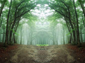Symmetrical mysterious green forest with fog — Stock Photo