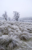 Frozen meadow with plants and trees — Stockfoto