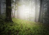 Floresta de natureza — Foto Stock