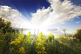 Summer landscape with flowers and clouds on sky — Foto Stock