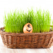 Golden dollar  egg in  basket with grass.  — Stock Photo