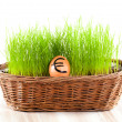 Golden euro  egg in  basket with grass.  — Stock Photo
