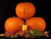 A trio of pumpkins against a black background — Stock Photo