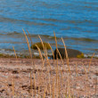 Coastal sea grass — Stock Photo