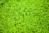 A Green grass background texture. — Stock Photo