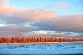 Frosted trees against a blue sky — Stock Photo