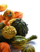Gourds — Stockfoto