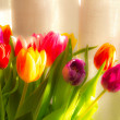 Colourful tulips in sunlight — Stock Photo