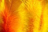 Färgglad påsk fjädrar i solljus — Stockfoto