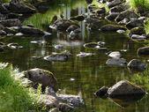 河床与长满苔藓的石头和清澈的水 — 图库照片