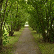 Hazel treee avenue - light at the end of the tunnel — Stock Photo