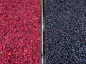 Lingonberries and Blueberries at market — Stock Photo