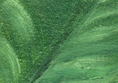 Closeup - part of oil painting - leaf — Stock Photo
