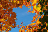 Colourful autumn trees against blue sky — Stock Photo