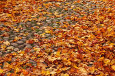 Autumn leaves on old cobbled street — Stock Photo