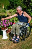 Gardening in Wheelchair — Stock Photo